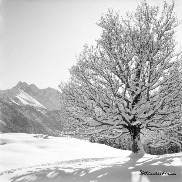 Winterwelt II.