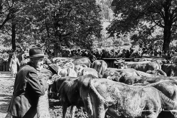 Besucher beim Viehscheid