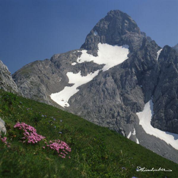 Alpennelken vor Trettach