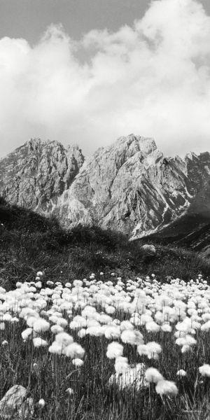 Hammerspitze mit Wollgras
