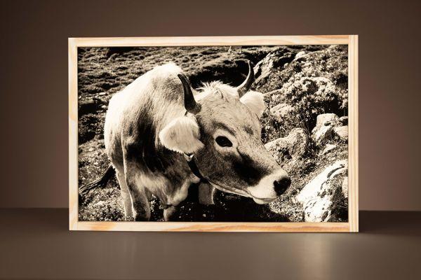 Leuchtbox Kuh mit Alpenrosen