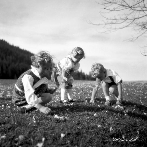 Kinder auf der Krokuswiese