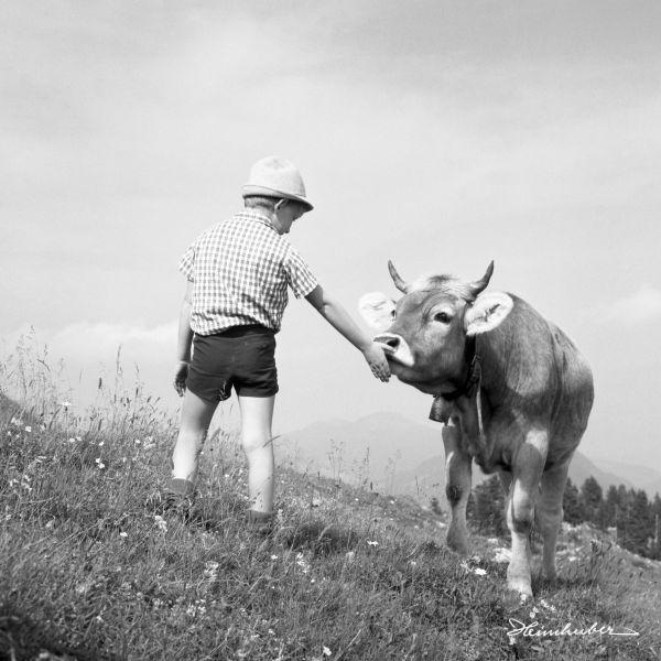 Bub mit Kuh