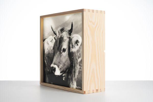Leuchtbox Allgäuer Kuh