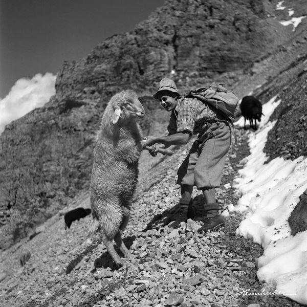 Der mit dem Schaf tanzt