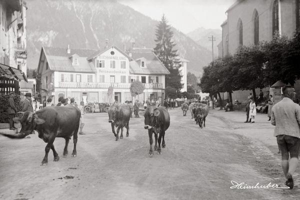 Marktplatz Oberstdorf mit Kühen