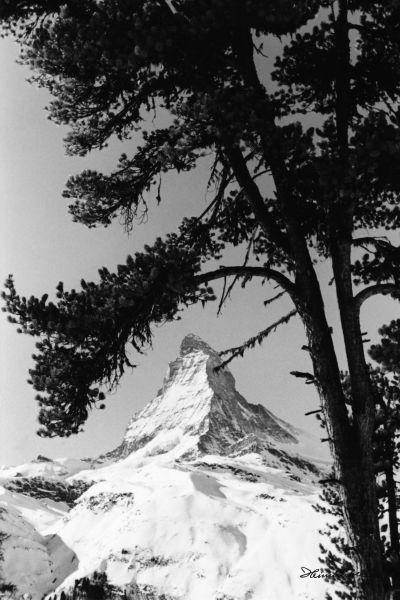 Matterhorn mit Baum